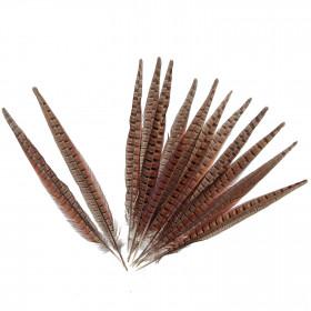 Grande plume de faisan commun - A l'unité