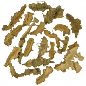Lot de branches de bois de mûrier semi-découpées - 1 kg