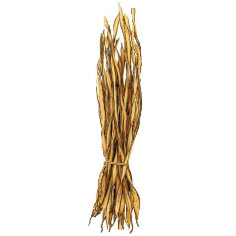 Fagot d'herbe fire grass - 35 cm