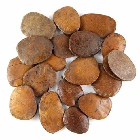 Graines décoratives moeda - 100 grammes