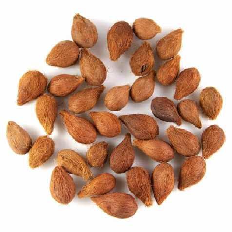 Graines décoratives adam - 100 grammes