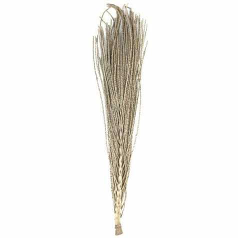 Branche de palmier coco do para