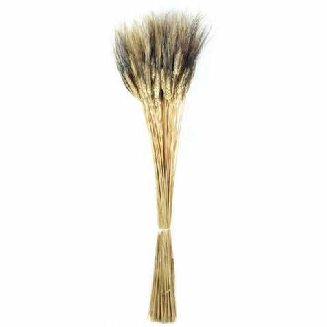 Bouquet botte de blé à barbe noire