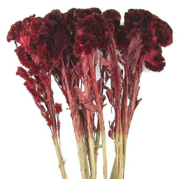 bouquet de fleurs s ch es c losias rouges naturosph re. Black Bedroom Furniture Sets. Home Design Ideas
