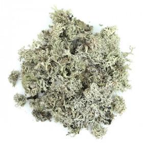 Mousse de chêne séchée - 100 grammes