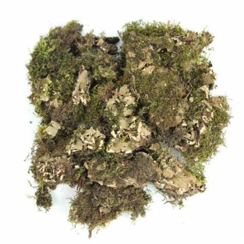Mousse de roche séchée marron - 100 grammes