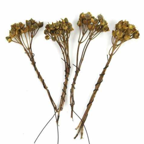 Branches d'asar - Lot de 4