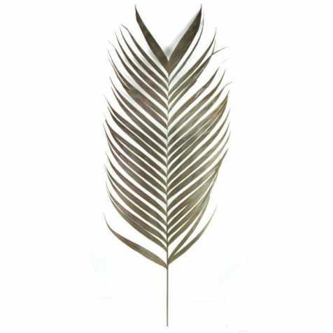 Feuilles de palmier naturelles aréca - Lot de 2