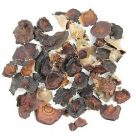 Champignons bruns des forêts pour la décoration - 40 grammes