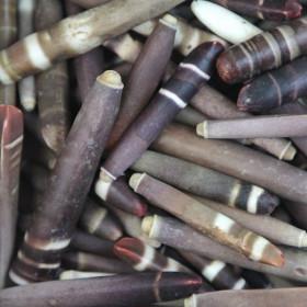 Epines d'oursin crayon - 100 grammes