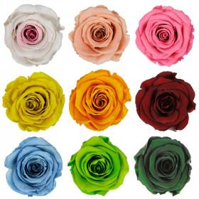Tête de rose stabilisée