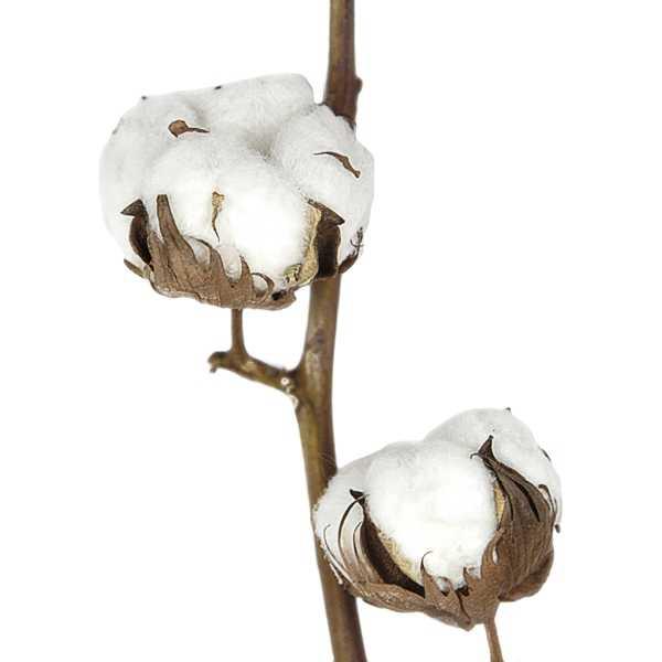 branche de fleurs de coton 60 70 cm naturosph re. Black Bedroom Furniture Sets. Home Design Ideas