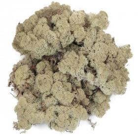 Lichen des rennes stabilisé blanchi - 50 grammes