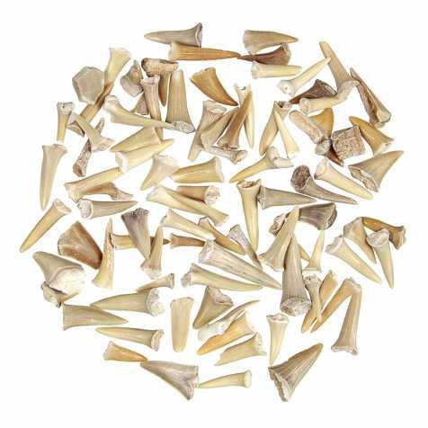 Lot de dents de requin fossilisées - 100 grammes