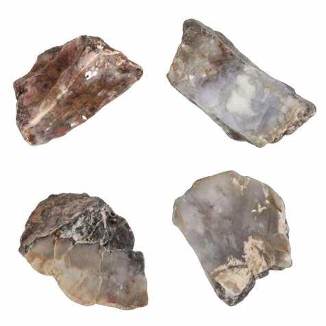 Coprolithe scié de dinosaure - 5 à 7 cm - A l'unité