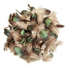 Plumes de faisan de Lady Amherst amande bronze - 5 grammes