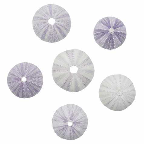 Tests d'oursins blancs et violets - 4 à 6 cm - Lot de 3