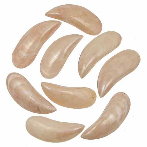 Coquillages perna viridis rose nacré entier poli - 8 à 10 cm - Lot de 4