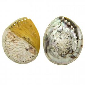 Coquillage haliotis mi-teinté jaune