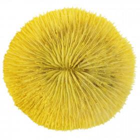 Corail fungia fungites jaune