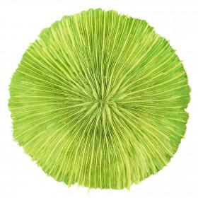Corail fungia fungites vert