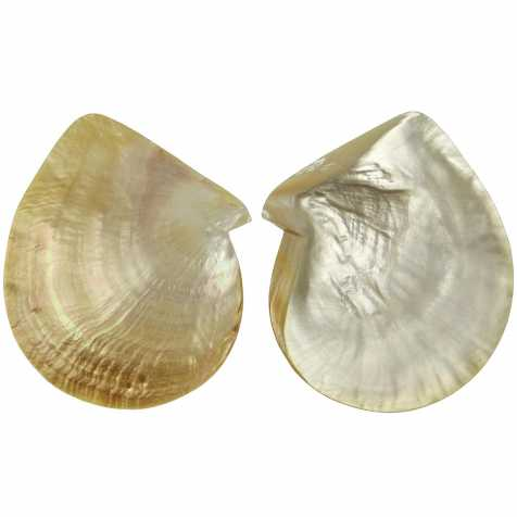 "Nacre de coquillage ""mother of pearl"""