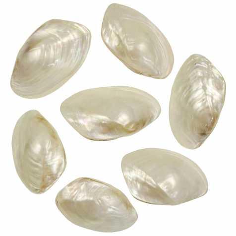 Coquillages mussel nacrés polis entiers - 7 à 9 cm - Lot de 3