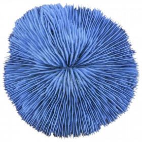 Corail fungia fungites bleu