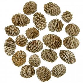 Têtes de leucadendron - 250 grammes