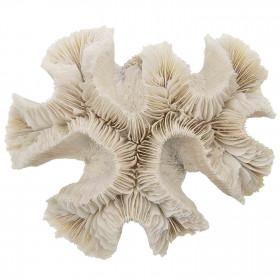 Bloc de corail fleur - 349 grammes