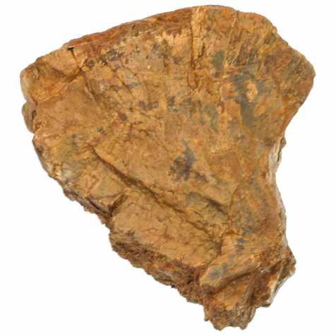 Bois fossilisé - 11 cm