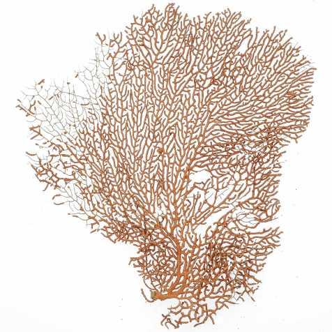 Gorgone rouge ou éventail de mer déco - 25 x 23 cm