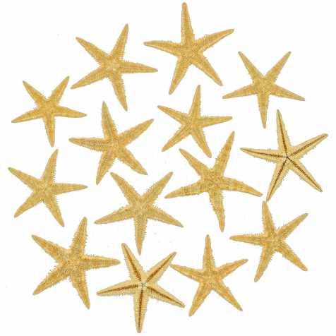 Etoiles de mer décoration astropecten vappa - 3 à 5 cm - Lot de 15