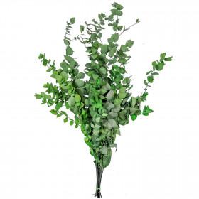 Feuillage d'eucalyptus stuartiana vert stabilisé - 50 cm