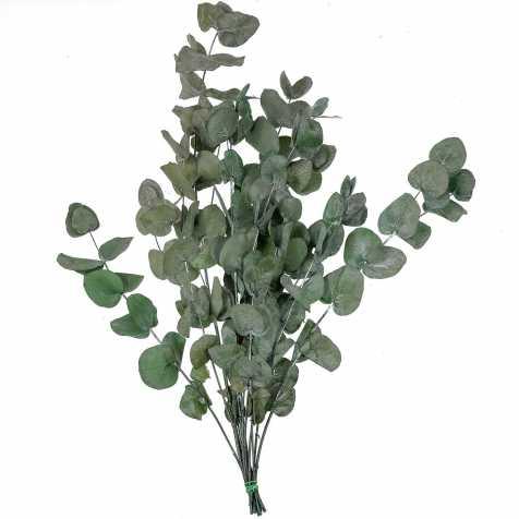 Feuillage d'eucalyptus cinerea stabilisé - 75 cm