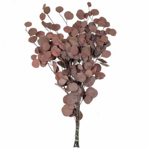 Feuillage d'eucalyptus populus rouge stabilisé - 65 cm