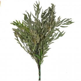 Feuillage d'eucalyptus nicoly vert stabilisé - 75 cm