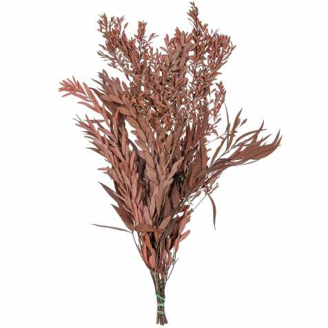 Feuillage eucalyptus nicoly rouge stabilisé - 75 cm