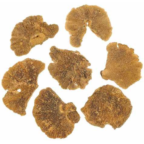 Champignons séchés décoratifs - 100 grammes