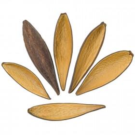 Cosses de canoinhas - 11 à 15 cm - Lot de 5