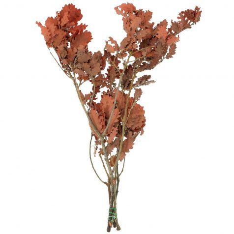 Feuillage stabilisé de chêne rouge - 60 à 70 cm