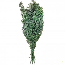 Branchage de ruscus vert stabilisé - 90 cm.