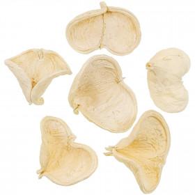 Coque de badam blanchi - 8 à 10 cm - Lot de 5