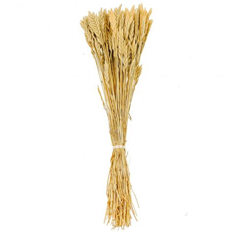 Bouquet de blé spiga d'oro - 38 cm