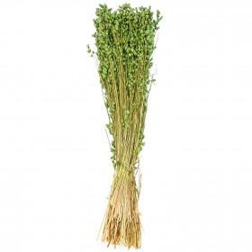 Bouquet de briza maxima vert - 60 cm