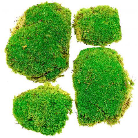 Mousse naturelle stabilisée forme ronde