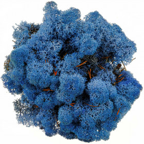 Lichen des rennes stabilisé bleu - 120 grammes