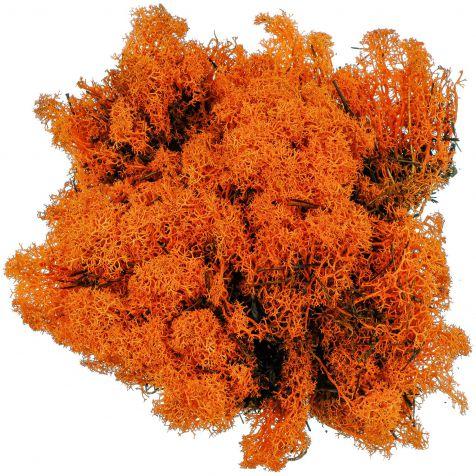 Lichen des rennes stabilisé orange - 120 grammes
