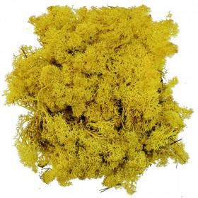 Lichen des rennes stabilisé jaune - 120 grammes.