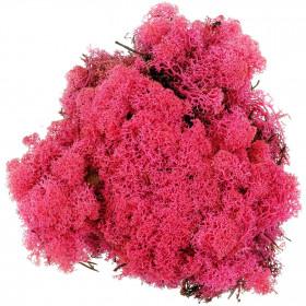 Lichen des rennes stabilisé fuchsia - 120 grammes.